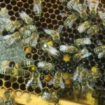 06-Bienen.jpg