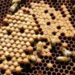 Bienen2020_13.jpg
